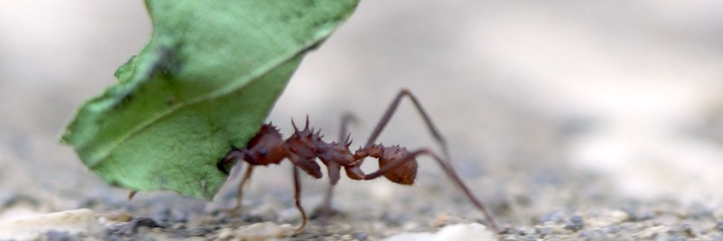 Was It Designed? How Do Ants Avoid Traffic Jams?